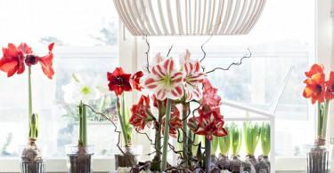 Foto: Blomsterfrämjandet/Anna Skoog