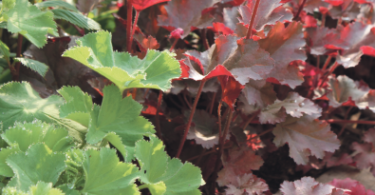 Röda och gröna blad