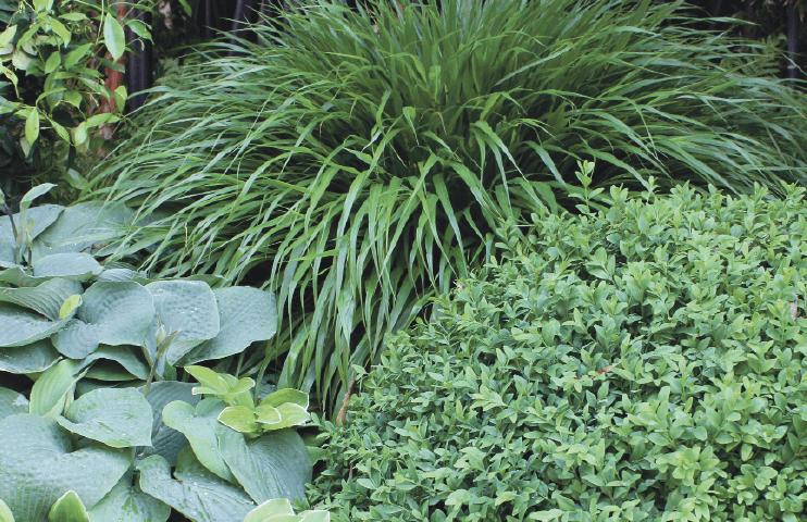 Grönska i trädgård