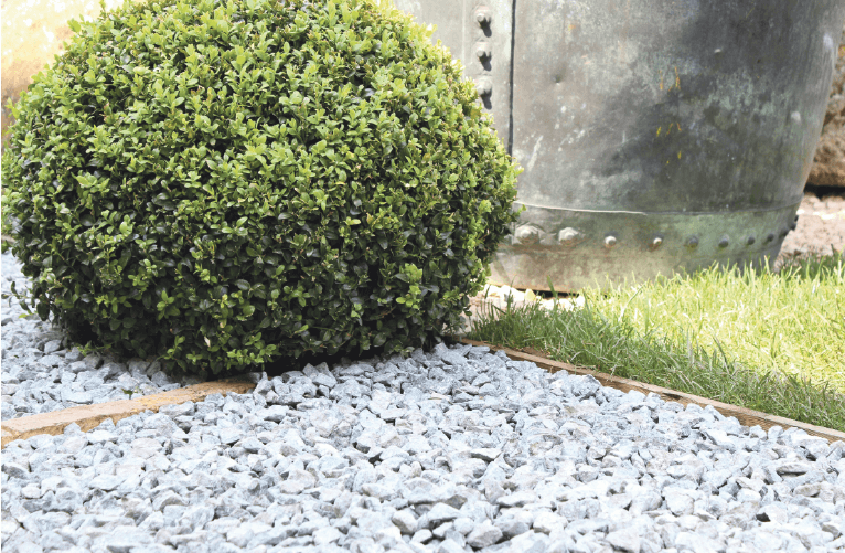Sten och rund buske