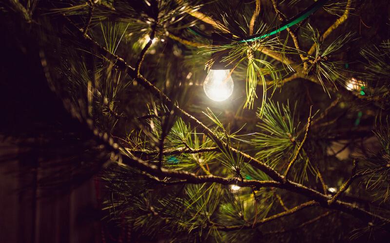 Utomhusbelysning i träd